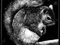 180118_Squirrel