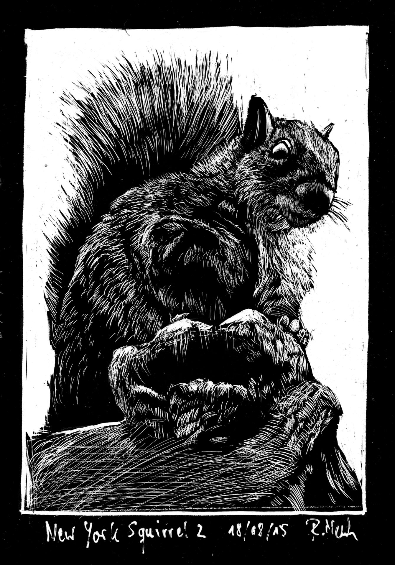180815_squirrel
