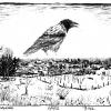 180222_Winterkrähe